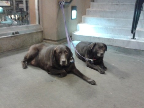 No Photos For This Article, So Instead Twin Dogs Outside Broadway QFC/Sebastian Garrett-Singh